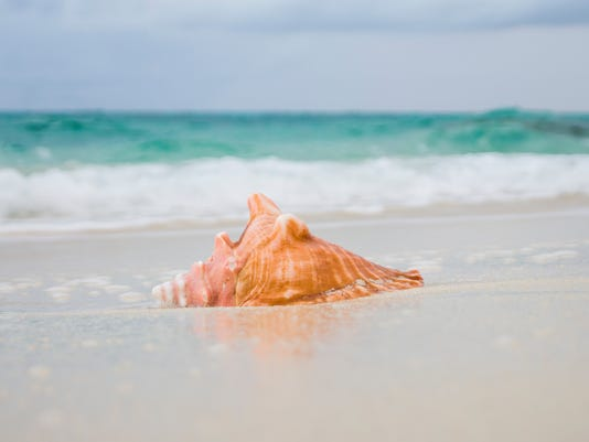 conch - in wet sand
