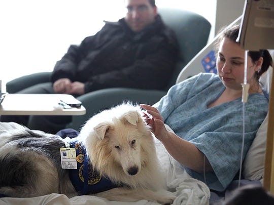 Lothair, a deaf therapy dog that owner Melanie Paul takes to Langley AFB weekly, waits to be petted by patient Rebecca Bennett on Jan. 7 in Hampton.