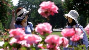 Friends Yumi Takeuchi (left) and Teruyo Nakagawa, both of Salem, wander through rows of roses at the Municipal Rose Garden in Bush's Pasture Park in Salem on Thursday, May 28, 2015.