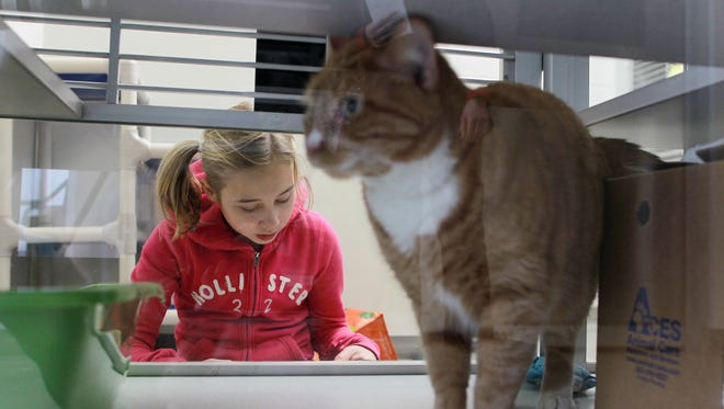 Ava Palmberg, 11, reads to a cat at the Iowa City Animal Center on Thursday, March 3, 2016. The center began the reading program for children to become more comfortable with reading and for the animals to become comfortable around people.
