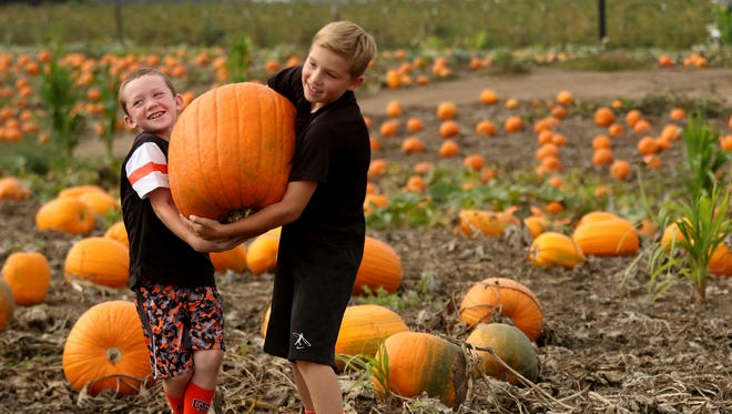 Friends E.J. Rubesh, 8, left, and Colin Cordle, 9, both of Albany, try to carry a pumpkin during the Harvest Festival at Greens Bridge Gardens in Jefferson, Ore., on Wednesday, Oct. 7, 2015.