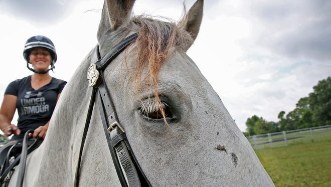 Finn, a 6-year-old Percheron/Quarter Horse cross, eyes the IMPD Mounted Patrol training, as Officer Ivy Craney leads the traing, Thursday, August 17, 2017.
