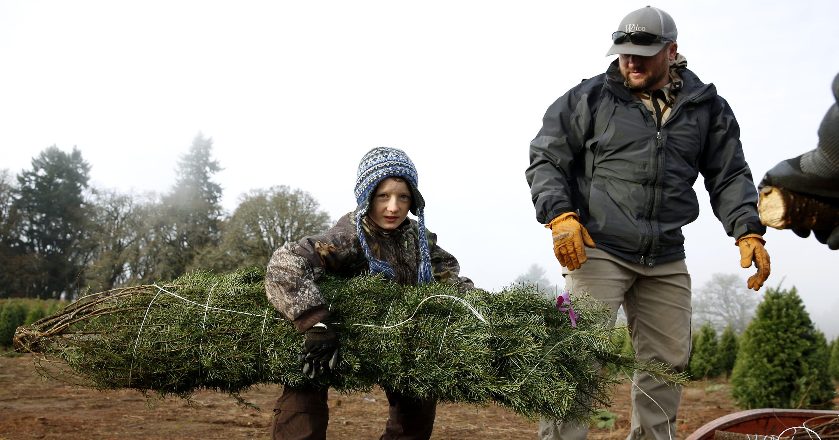 U-Cut, pre-cut Christmas tree farms in and near Salem, Oregon