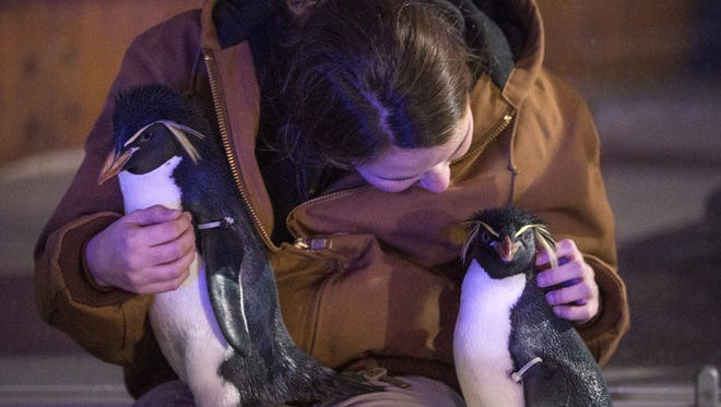 There's no telling who you might need to save from the cold Tuesday. Penguin-keeper Kacie Bruton snuggles with a penguin during Indianapolis Zoo's Christmas at the Zoo.