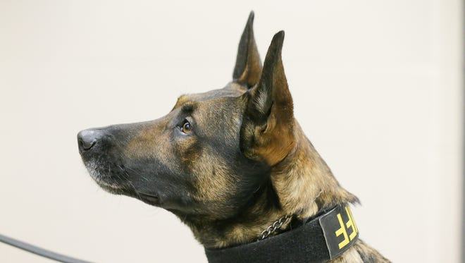 Brik, the K-9 partner of slain Boone County Sheriff's Deputy Jacob Pickett was in attendance at a press conference where charges were announced in Pickett's death.