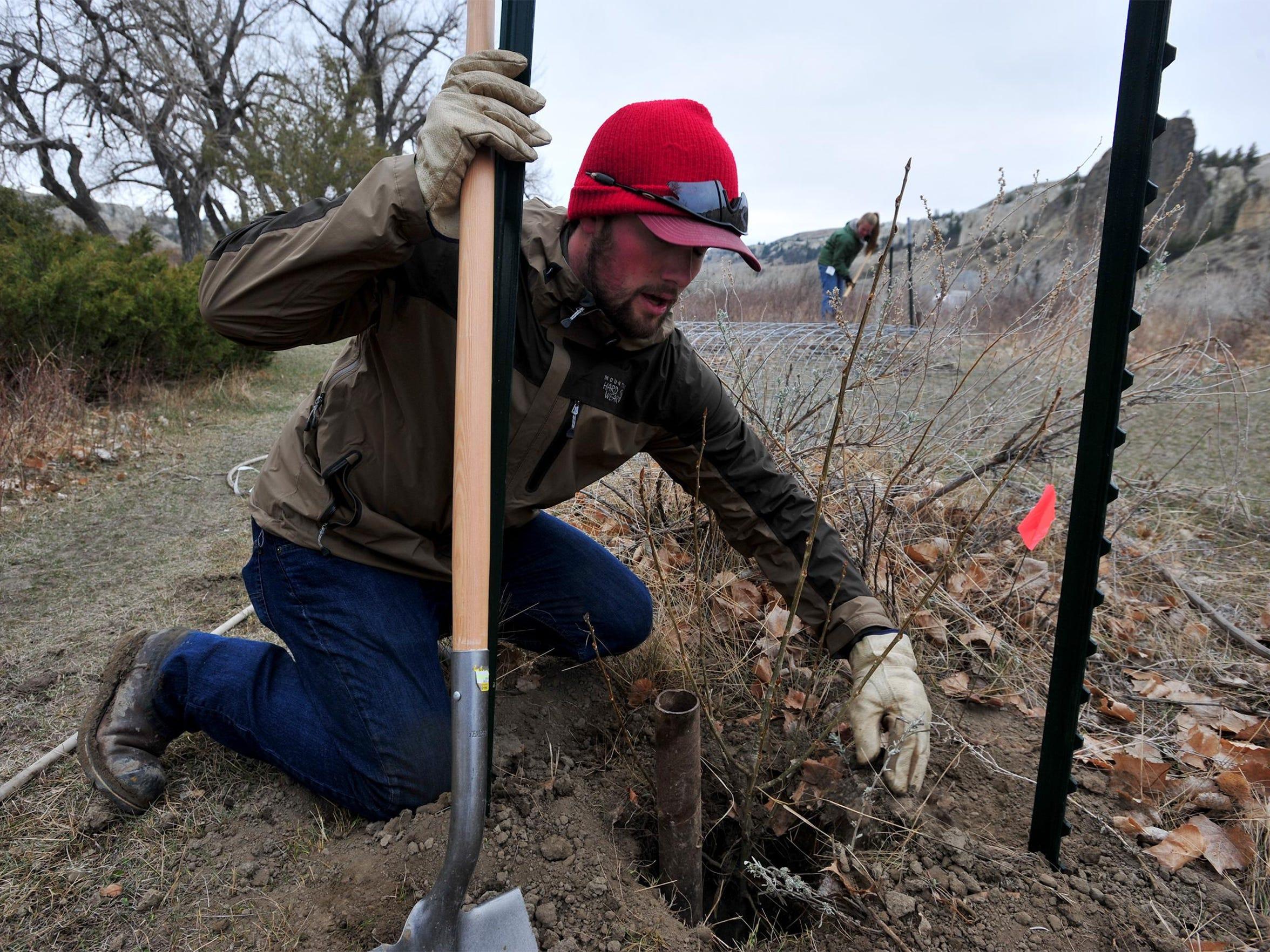 -03222016_planting cottonwoods-p.jpg_20160322.jpg