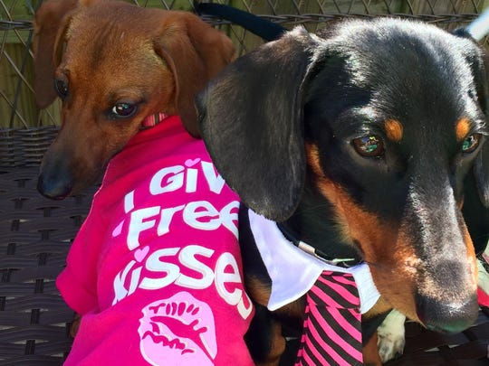 "Skeeter is wearing a ""I give free kisses"" t-shirt that she will wear on Saturday while covering the Petpawloosa event in Waynesboro. Tad is wearing a matching pink tie."