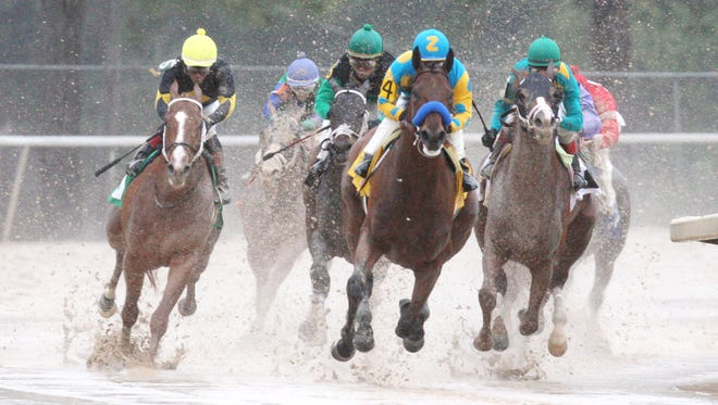 American Pharoah dominated Oaklawn Park's Rebel Stakes, winning March 14 by 6 1/4 lengths in the slop.