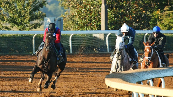 Limousine Liberal blew past graded stakes-winners Curalina (on rail) and Race Day during his five-eighths of a mile workout at Keeneland Friday.