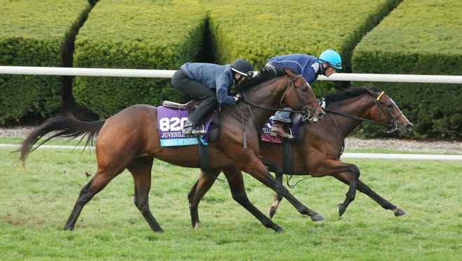 Sheikh of Sheikhs on the outside, trains with  Ruby Notion at Keeneland.