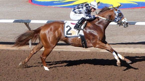 Magnifico Dragon will headline the 400-yard Shue Fly Stakes on Sunday at Sunland Park Racetrack & Casino.