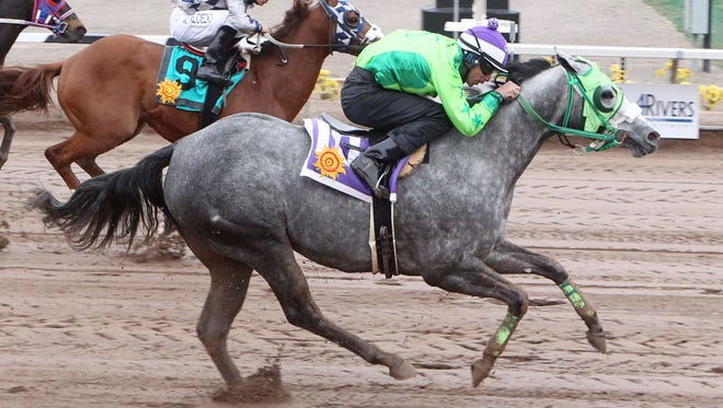 Running Dragon won the 400-yard Shue Fly Stakes on Sunday at Sunland Park Racetrack & Casino for trainer Juan M. Gonzalez.