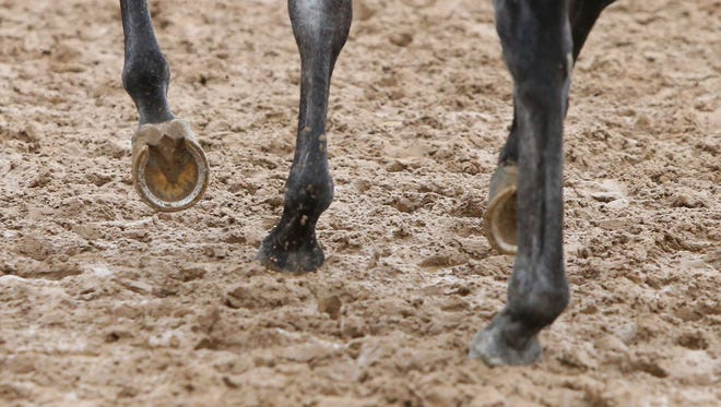 File photo of horse trotting.