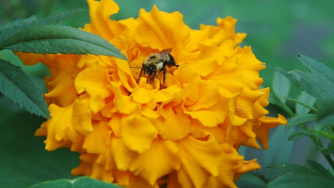 Understanding the needs of bees goes a long way toward successful efforts to help them thrive.
