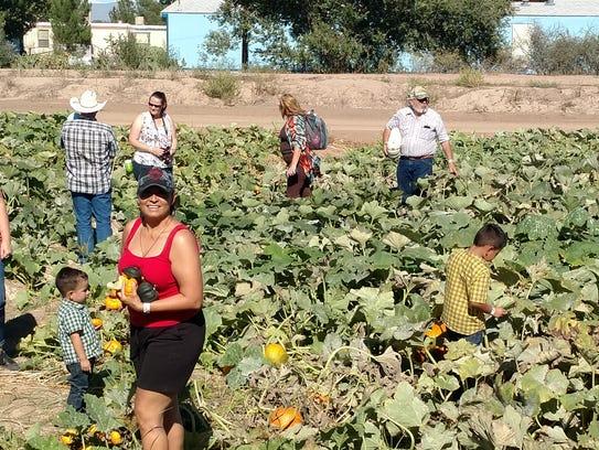 The Mesilla Valley Corn Maze includes a wagon ride