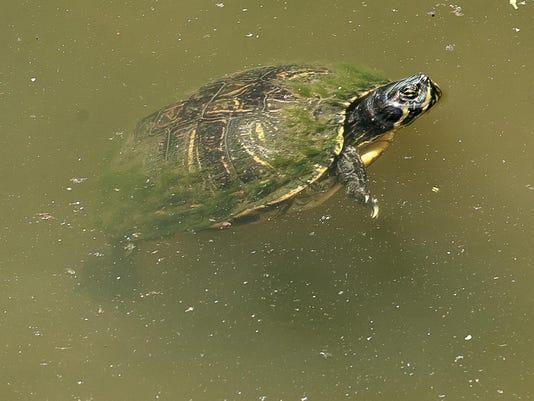 Wildlife Sanctuary-Turtles_6