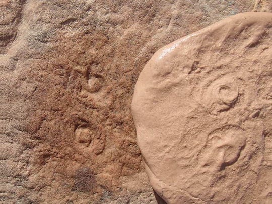 Fossils of an ancient sea creature were found embedded in sandstone in Australia, and were named Obamus coronatus after President Barack Obama.