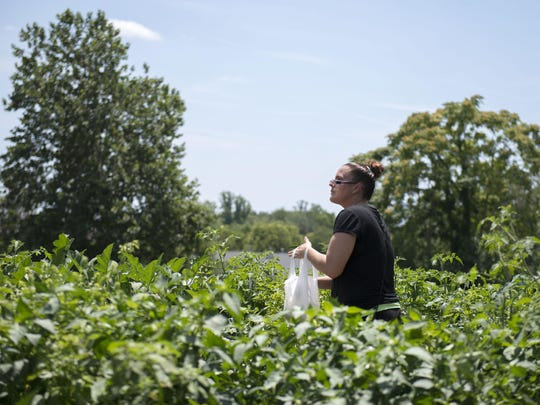 Mellissa Fields collects cucumbers and basil from the