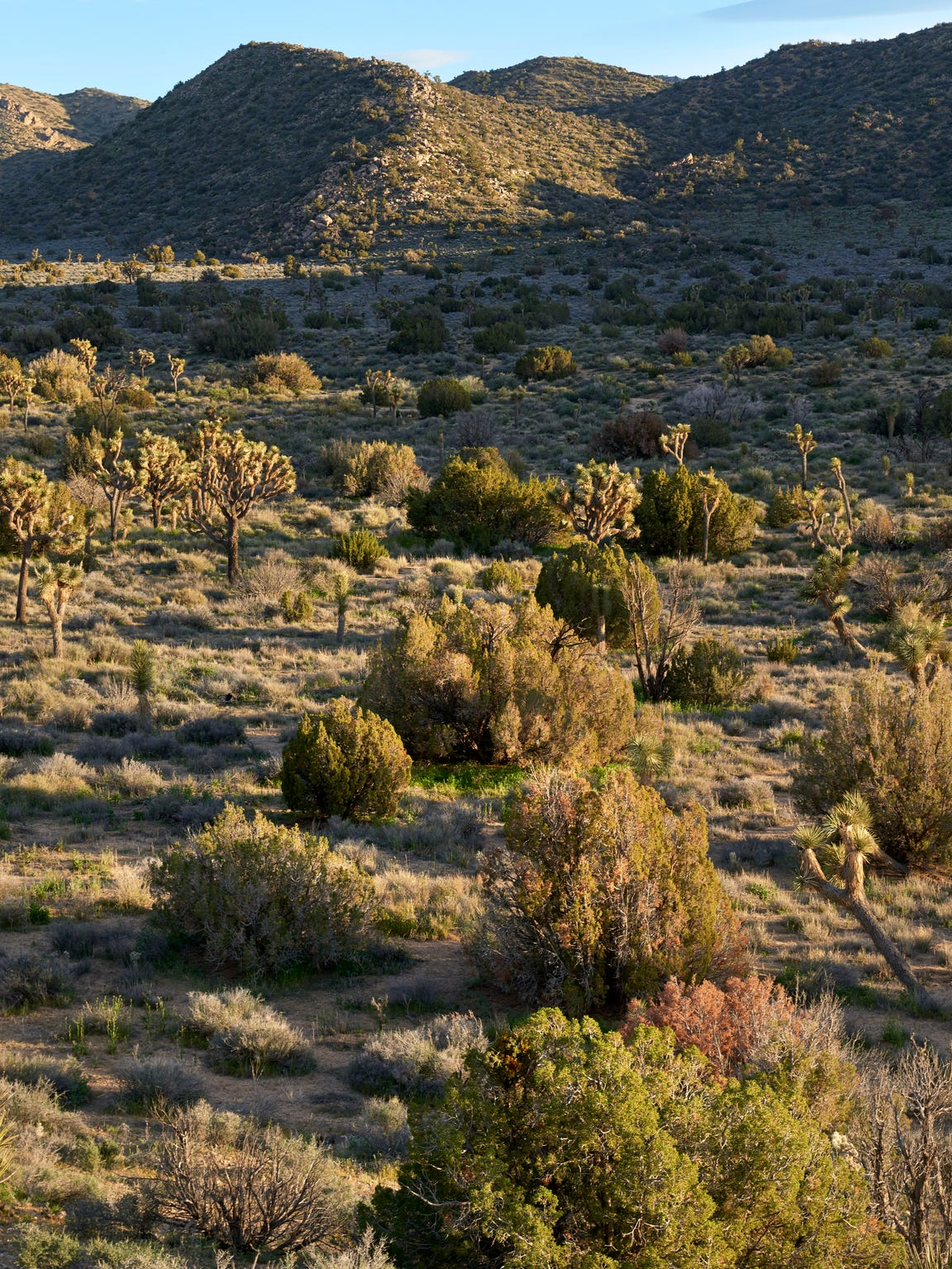 Fewer plants in the desert, whether due to death or