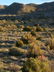 Fewer plants in the desert, whether due to death or decreased reproduction rates, means less food for the wildlife that relies on them for survival.