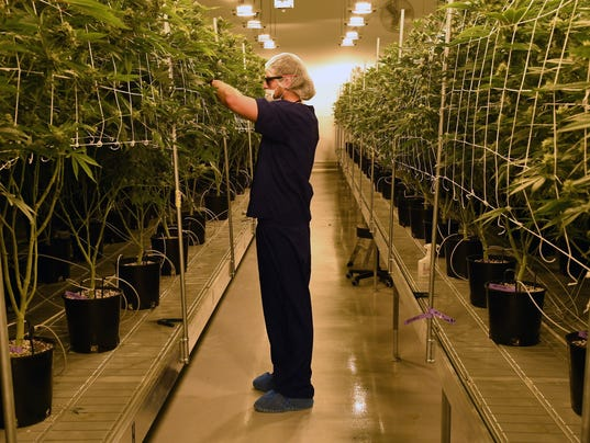 Marijuana Cultivation Center In Nevada Ramps Up Production As State Legalizes Recreation Use Of Weed
