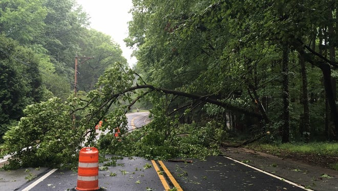 A tree brought down power lines in Brandywine Hundred Monday morning at the intersection of Darley Road and South Trail.