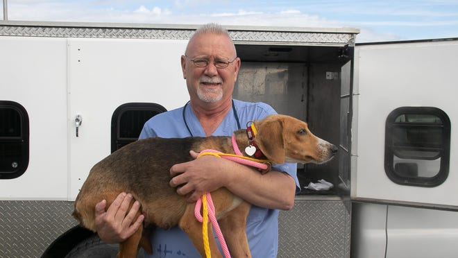 Tommy Bell holds Freedom, a walker hound that had been living as a stray in Pamlico County for three years.