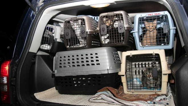 The Jeep Patriot is filled with carriers containing 38 cats. [Bill Hand / Sun Journal Staff[