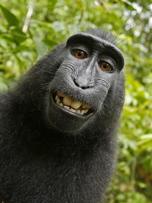 Monkey Selfie Lawsuit