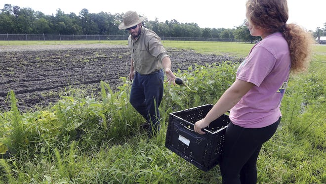 In this Thursday, June 18, 2020 photo, Dorchester County Career and Technology Center instructor Russell Henderson tosses an eggplant he just picked into a basket that agriculture student Mady Platt holds in Dorchester County, S.C.