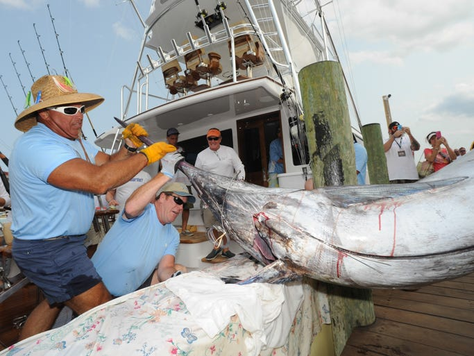 Alex Davis and the members of the Gratitude pull a blue marlin to the docks on Thursday afternoon during the fourth day of the White Marlin Open in Ocean City.