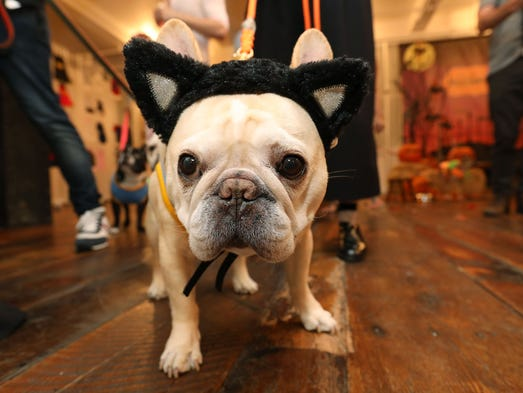 Want your dog to be a cat this year? Try these ears