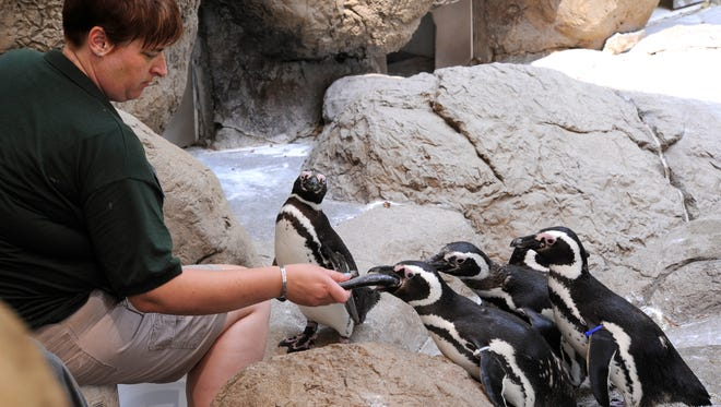 Potter Park Zoo in Lansing is open every day of the year, except for Christmas.