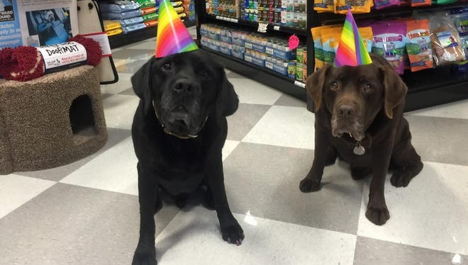 Come to Pet Etc. on Saturday, April 7, to celebrate Cooper, left, and Cody's 15th birthday.