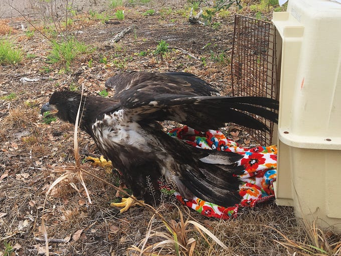 The Clinic for the Rehabilitation of Wildlife (CROW)
