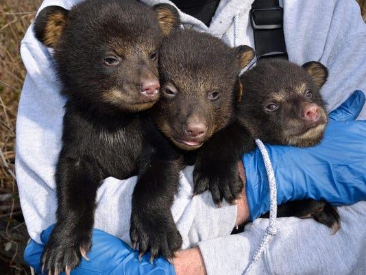 bear cubs.JPG