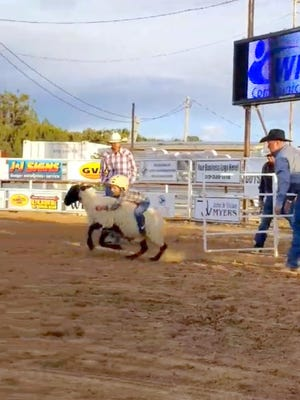Mutton Bustin' is a popular event at the Wild, Wild West Pro Rodeo. The action begins every night during the rodeo at 7:30 p.m. Above, a child hangs on for dear life during Wednesday's Boys and the Bulls.