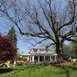 Historic Scarsdale tree celebrated for Arbor Day