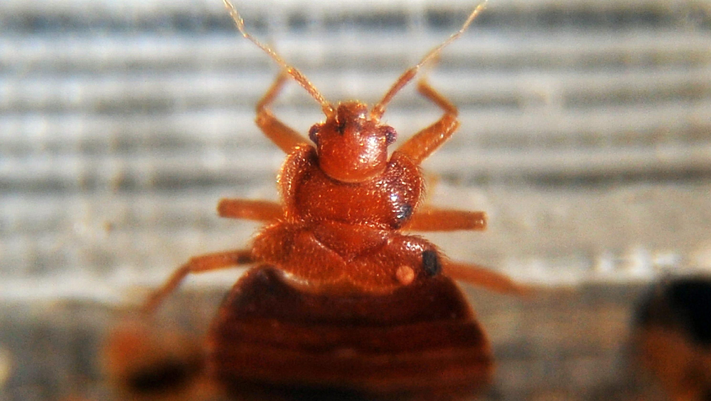 Image result for Bed Bug Infestation