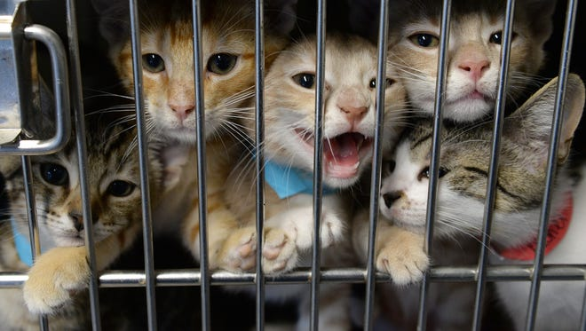 Cats and dogs can be adopted at no cost from the Gloucester County Animal Shelter on Feb. 26, 2019.