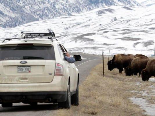 -Yellowstone Bison Hunt.jpg_20130322.jpg