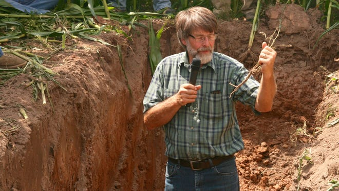 Crop consultant Jim Martindale examines an alfalfa root which is almost completely devoid of important lateral roots.