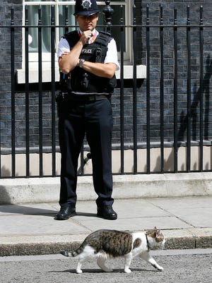 Larry the Downing Street cat walks past a police office in 10 Downing Street in London, after Britain's Prime Minister David Cameron left to face prime minister's questions for the last time Wednesday, July 13, 2016.