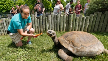Galapagos tortoise leaves Lafayette to find friend in Ohio
