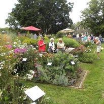 Master gardening: Enjoy a morning at the award-winning gardens of Rudy Park