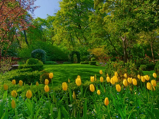 Tulips bloom in the gardens at Deepwood Museum & Gardens.