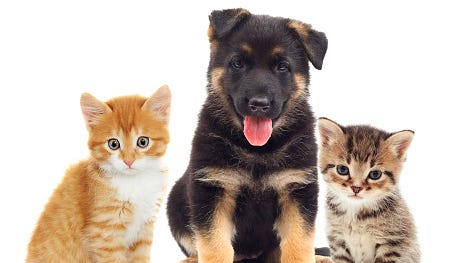 A stock image of a puppy and kittens.