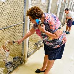 Dog adoptions resume at San Angelo animal shelter after parvo outbreak