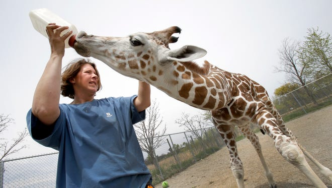 The Special Memories Zoo in Greenville, which features a range of animals from giraffes to kangaroos, was found to have several violations in a recent inspection by the U.S. Department of Agriculture.
