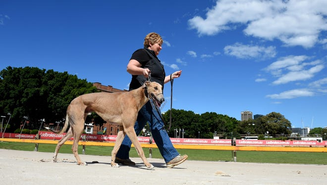 Greyhound breeder and trainer Annette Fleming walks with her dog Jett at a race track in Australia over the summer.